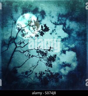 Moonscape bleu et la silhouette des arbres Banque D'Images