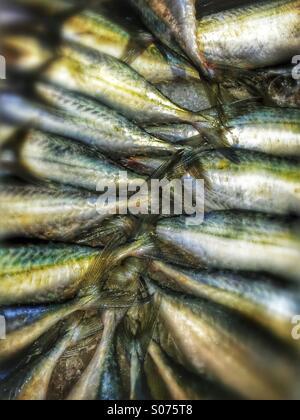 Queues de poisson Banque D'Images