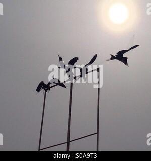 Les oiseaux et le soleil noir Banque D'Images