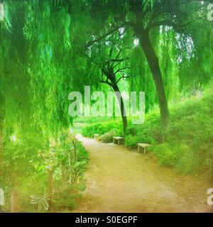Green verdoyant parc de Bercy avec Arbres et feuillage frais du printemps à Paris, France. Superposition de texture vintage.