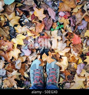 Pieds avec des chaussures de randonnée se tenant sur le sol avec les feuilles d'automne Banque D'Images