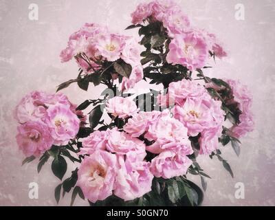 Fleurs rose rose Banque D'Images