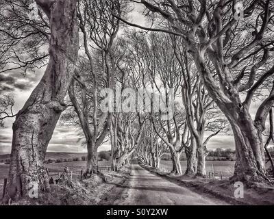 Un 18e siècle Avenue de hêtres connu comme 'THE DARK HEDGES.' situé dans le comté d'Antrim et Stranocum près de Banque D'Images