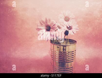 Fleurs Daisy avec un filtre de couleur appliqué