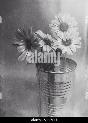 Fleurs Daisy avec un noir et blanc filtre appliqué