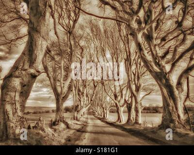'THE DARK HEDGES' - une avenue du 18e siècle près de hêtres dans Ballymoney Co. d'Antrim, en Irlande du Nord. Cet Banque D'Images
