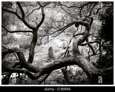Twisted branches d'arbres en hiver à Matlock Bath Derbyshire Peak District UK Banque D'Images