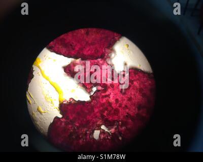 Vue au microscope optique Banque D'Images