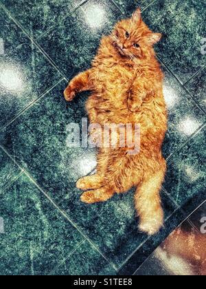 Image texture créative de grand chat tigré orange moelleux portant sur plancher de tuiles
