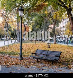 Matin d'automne dans le parc Banque D'Images