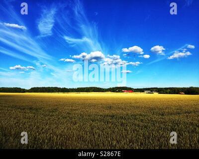 Voir de champs agricoles à Husby-Ärlinghundra l'église, à l'extérieur de l'Arlanda, Sigtuna, Stockholm en Suède. Ferme et grange rouge typique dans l'arrière-plan. Soleil, ciel bleu et nuages blancs. Banque D'Images