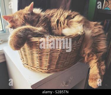 Gros chat orange moelleux dormir dans un petit lit de chat panier en osier