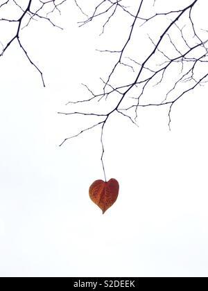 Une feuille en forme de coeur solitaire pendu à une branche d'arbre nu. Banque D'Images