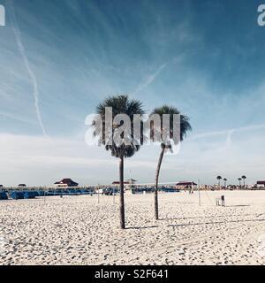 Deux palmiers sur la plage de sable blanc de Clearwater Beach en Floride Banque D'Images