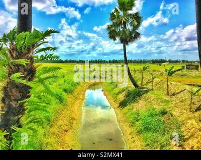 Beauté naturelle de Bangladesh Banque D'Images