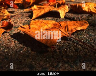 L'automne d'or et feuilles d'automne sur le sol au début de la lumière du matin, une faible perspective. Concept de l'automne, saison d'automne, les voyages et la nature Banque D'Images