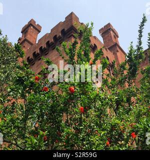 """La Smithsonian Institution Building, communément appelé """"le Château"""", vu l'augmentation de plus d'une plante de bush dans l'Enid A. Haupt Garden, Washington, D.C., United States Banque D'Images"""