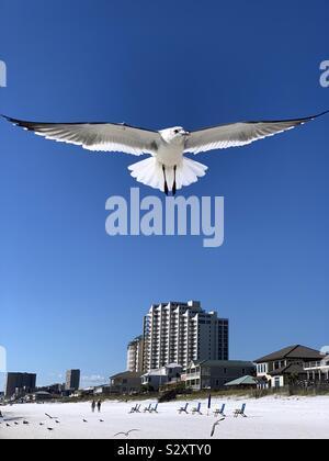 Gros plan du inflight seagull avec ailes déployées pleinement sur plage de sable blanc avec city scape et ciel bleu Banque D'Images