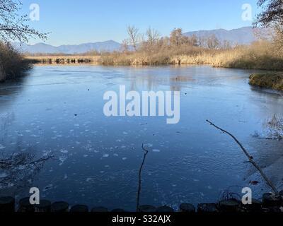 Marais congelés dans le nord de l'Italie, région de varese, en janvier Banque D'Images