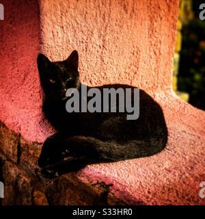 Chat noir reposant au soleil sur un mur de ferme grecque