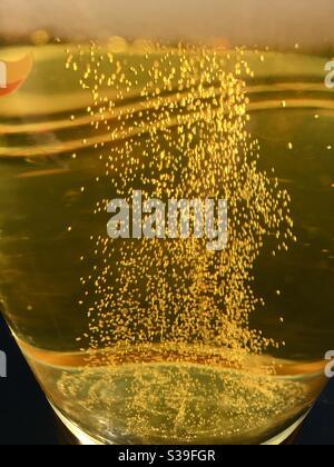 La bière dorée passe par un verre Banque D'Images