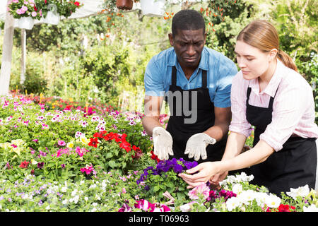 Les jeunes jardiniers, hommes et femmes en noir sur les tabliers en fleurs orangerie