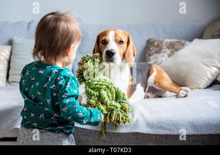 Chien avec un mignon caucasian baby girl. Beagle se coucher sur un canapé, bébé vient avec jouet pour jouer avec lui. Copier l'espace.