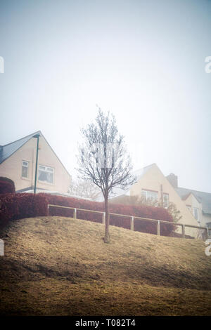 À la recherche de maisons dans la brume avec un arbre sans feuilles nues dans le centre. Consett, County Durham , Royaume-Uni Banque D'Images