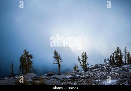 Mélèzes et des nuages bas dans la région sauvage des lacs d'enchantement, Cascades de Washington, USA. Banque D'Images