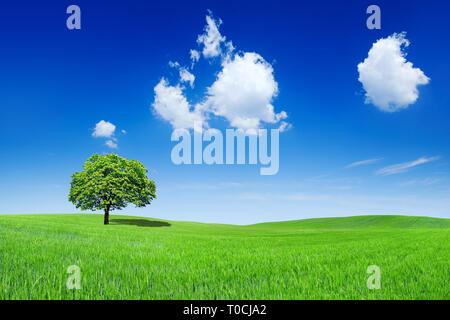 Paysage idyllique, lonely tree parmi des champs verts, à l'arrière-plan ciel bleu et nuages blancs Banque D'Images