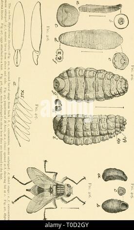 Entomologie économique pour l'agriculteur entomologie économique pour l'agriculteur et producteur de fruits-economicentomolo Année: 1906 smit01