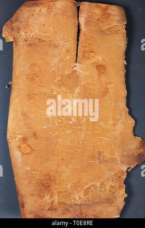 Art fond. Côté dorsal fendu à rayures de l'écorce de bouleau Banque D'Images