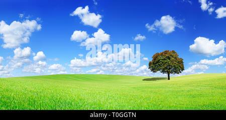 Superbe vue panoramique, paysage lonely tree parmi des champs verts, à l'arrière-plan ciel bleu et nuages blancs Banque D'Images