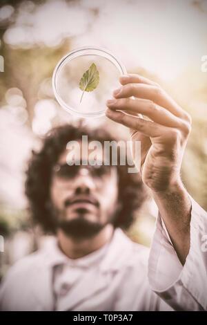 Male scientist inspecting leaf sur boîte de pétri à émissions de