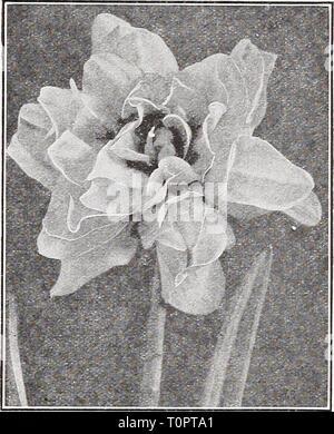Catalogue automne 1932 l'Dreer (1932) Dreer catalogue automne 1932 l'dreersautumncata1932henr Année: 1932 hBULRS:'r&gt;. Plantation en automne 13 jonquilles ou narcisses Double aucune collecte de Narcisse n'est complète sans la double-floraison sortes. Bien que pas aussi attrayant qu'un grand nombre de variétés unique et l'absence de variété de coloration, ils possèdent un charme typiquement leur propre. Tous sont parfaitement rustiques et sont très en demande pour la coupe. Alba Plena Odorata {du poète Double Narcisse ou jonquille Gardenia). Blanc pur, beau, avec le délicieux parfum des fleurs orange. Tiges solides. Fleurit très