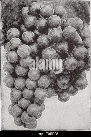 Catalogue automne 1932 l'Dreer (1932) Dreer catalogue automne 1932 l'dreersautumncata1932henr Année: 1932 NOTE Raisins Hardy-Plants sera envoyé par colis postal si le versement est effectué pour couvrir les frais de port et d'emballage spécial comme indiqué à la page 95. (65)