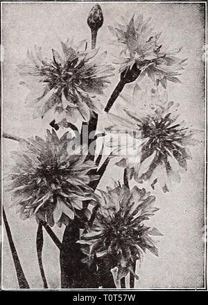 Catalogue automne 1932 l'Dreer (1932) Dreer catalogue automne 1932 l'dreersautumncata1932henr Année: 1932