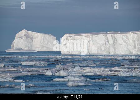 L'Antarctique, ci-dessous le cercle antarctique. Les phoques crabiers sur la glace des icebergs dans la baie remplie dans la Mer de Bellingshausen dans Crystal Sound. Iceberg tabulaire. Banque D'Images