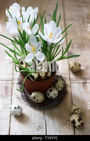 Composition de Pâques ou de printemps crocus et oeufs de cailles. Style rustique. Banque D'Images