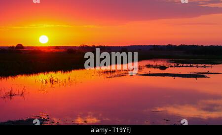 Un beau lever de soleil de printemps dans les zones humides. Parc national de Biebrza. La Pologne. Banque D'Images