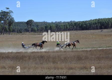 Formation des courses attelées en Tasmanie, Australie.Harness Racing ont une quantité importante de l'argent parié annuellement avec les bookmak Banque D'Images