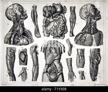 1849 Illustration médicale de l'anatomie humaine montrant le système circulatoire et des organes de l'abdomen, du cou et de la hanche Banque D'Images