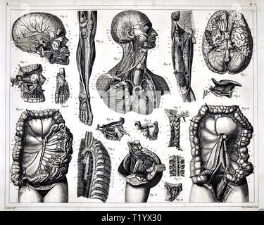 1849 Illustration médicale de l'anatomie du système circulatoire Banque D'Images