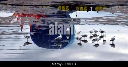 Canberra, Australie - le 9 mars 2019. Mouettes debout dans l'étang. Montgolfières décoller de l'Étangs de réflexion en face de la maison du Parlement Banque D'Images