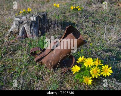 30 mars 2019, le Brandebourg, Mallnow: Adonis à côté d'une fleur fleurs rouillées et grenade a explosé à partir de la Seconde Guerre mondiale sur une pente Oderbruch. Non loin de ce lieu une fois que la plus grande bataille de la Seconde Guerre mondiale a eu lieu sur le sol allemand. Au printemps de 1945 des centaines de milliers de soldats se faisaient face à l'Oderbruch. Plus de 100 000 soldats d'autres nations est mort dans la bataille des hauteurs de Seelow'. La zone entre Mallnow et Lebus l'Oder au Brandebourg est l'une des plus grandes zones contiguës d'Adonisheröschen en Europe. Dans le Brandebourg, ces t strictement protégées Banque D'Images