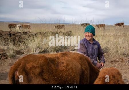 Bayan Ulgii, Mongolie, 2 octobre 2015: élevage de vaches kazak sa femme dans un paysage de l'ouest de la Mongolie Banque D'Images