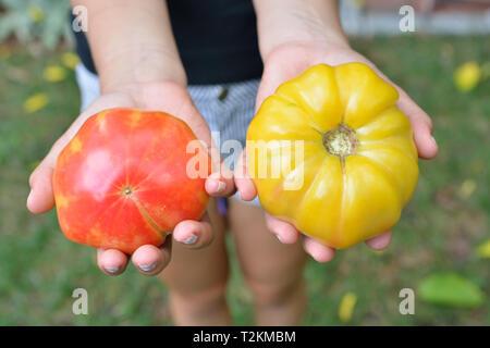 Une fille tenant deux tomates heirloom. Rouge, jaune, produits bio, produits d'été frais Banque D'Images