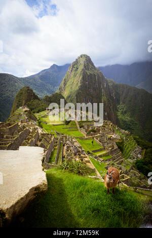 Le Machu Picchu au Pérou Banque D'Images