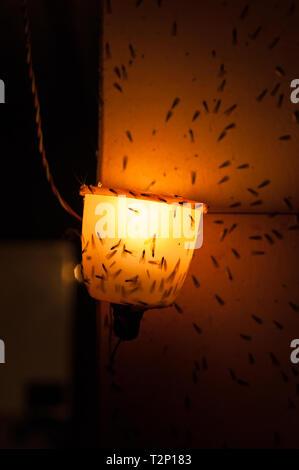 Les mites et les mouches autour d'une ampoule de nuit évoquent une sensation creepy. Banque D'Images