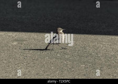 Oiseau en toute liberté. Photographie prise dans Low-Toned Sacramente, Colonia del Uruguay Banque D'Images